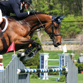 Show Jumping by Michele Williams - Sports & Fitness Other Sports ( jumps, riding, horse, grand prix, show jumping,  )