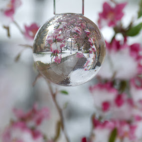 Sidewalk Through the Looking Glass by Logan Knowles - Artistic Objects Glass ( ball, winter flower, path, sphere, crystal,  )