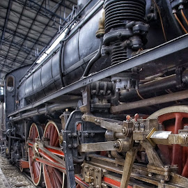 by Jose Figueiredo - Transportation Trains ( italia, train, museum )