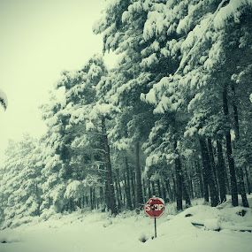 stop! a lot of snow by Samet Işık - Nature Up Close Trees & Bushes