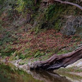 Tree by Majid Uppal - Landscapes Travel