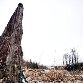 Obelisk by Todd Reynolds - Nature Up Close Trees & Bushes