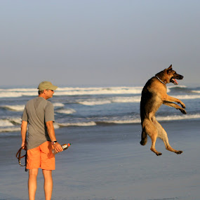 This dog is flying by Cristobal Garciaferro Rubio - Animals - Dogs Playing ( shore, sand, flying, sky, jumping, waves, dog, man )