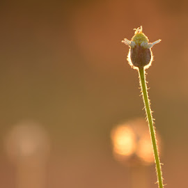 by Anand Lakshmi Kanthan - Nature Up Close Other Natural Objects