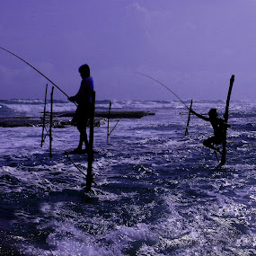 Stilt Fishermen of Sri Lanka by Sridhar Balasubramanian - Professional People Agricultural Workers ( south asia, stilt fishermen, blue hour, agriculture, fishing, sri lanka, beach )