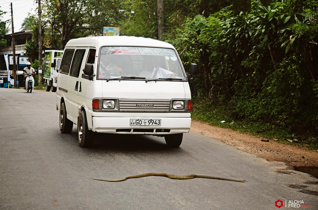 0078 - Sri Lanka - CP1A7533