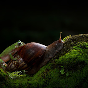 let me push you up by Andi Adinata - Animals Amphibians