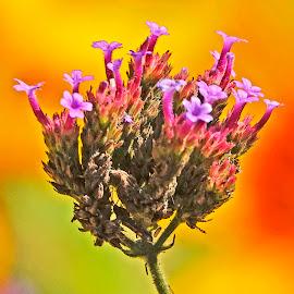 by Dee Haun - Flowers Flowers in the Wild ( flowers, 180630f3411ce01, flowers in the wild )