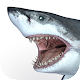 Talking Great White : My Pet Shark - Free