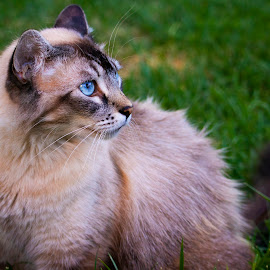 Curious Cat by Karoner Gaming - Animals - Cats Portraits ( color, cat, animal, animals, portrait )
