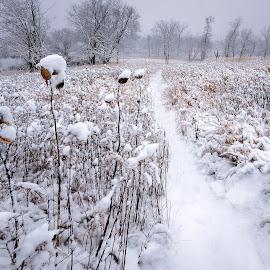 Trail to Solitude by Jon Kinney - Landscapes Prairies, Meadows & Fields ( cuba marsh, illinois, trail )