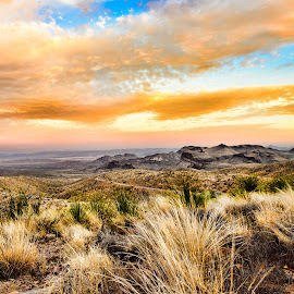 Golden Sunrise in the Desert by Judy Rosanno - Landscapes Deserts ( texas, big bend national park )