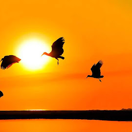 Flyatme by Johann van Dalen - Digital Art Animals ( moment, silhouette, sunrise, beach, birds )