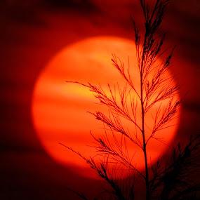 Sunset at Saintmartin's Island, Bangladesh by ডাঃ মুহাম্মদ হাসান - Landscapes Sunsets & Sunrises ( bangladesh, sunset, saintmartin's island, silhouette, red sun )