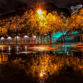 after the rain in LA  by Ariel Acaylar - City,  Street & Park  Night ( shadow water reflection, los angeles, night, light )