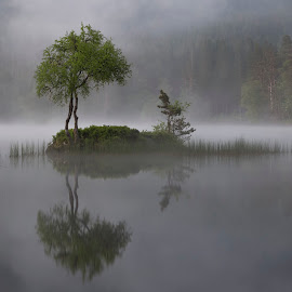 Tranquility  by Rune Askeland - Landscapes Waterscapes ( fog, reflections, trees, forest, lake, mist )