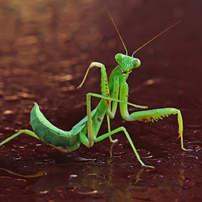 POSE by Ian Sumatika - Animals Insects & Spiders