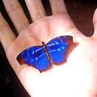 Blue Orsis