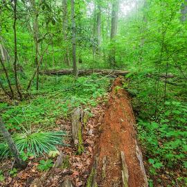by Ernesto Sanchez - Landscapes Forests