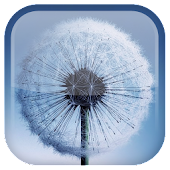 Download Dandelion Live Wallpaper APK on PC