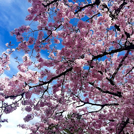 Trees Blooming in Springtime by Michael Villecco - Nature Up Close Trees & Bushes (  )