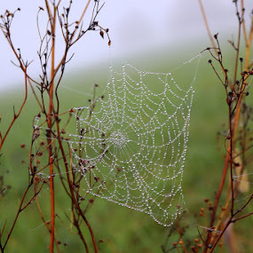 by Crystal  Wilson - Nature Up Close Webs