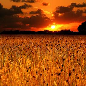 Autumn field of joy♪ by Pieter Arnolli - Landscapes Sunsets & Sunrises ( field, poppie, europe, autumn, sunset, holland, sunrise, netherlands )