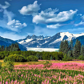 Fireweed and Mendenhall Glacier, Juneau AK by Michael Ziegler - Landscapes Mountains & Hills ( mendenhall glacier, fireweed, alaska, juneau, landscape )