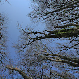 Sky Streamers by Nigel Street - Landscapes Forests