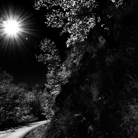 Into the unknown by Pantelis Orfanos - Landscapes Forests ( moon, black and white, trees, forest, road, sun, b and w, landscape, b&w, monotone, mono-tone )