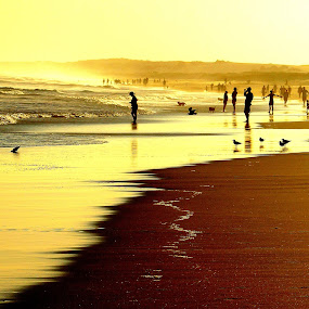 Sea of Gold by Carleen Corrie - Landscapes Beaches ( water, australia, beach, surf, light )