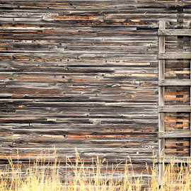 by Nicholas Cole - Buildings & Architecture Decaying & Abandoned ( ladder, wood, barn, grass, montana, outdoors, summer, heat )
