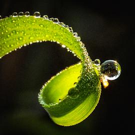 #1 by Kawan Santoso - Nature Up Close Natural Waterdrops