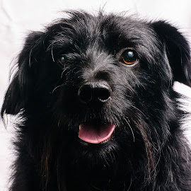 Max by Željko Grganić - Animals - Dogs Portraits ( black dog, max, pet, dog smiling, dog, black, animal )