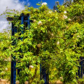 Tonnelle by Robert Namer - City,  Street & Park  City Parks ( natural light, blue sky, parks, nature up close, gardens, gardens by the bay, rose garden, city park, garden, gardenscape, garden flower, city )