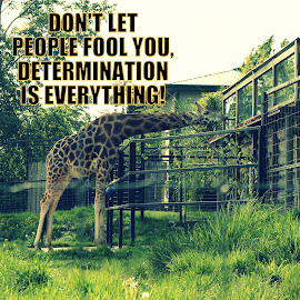 Determination by Ernie Kasper - Typography Captioned Photos ( obtaining, quote, reaching, drive, focused, determination, focus, trying, goal )