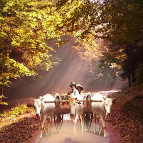 Bull ride by Elli Kraizberg - People Street & Candids (  )
