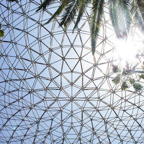 Roof Structure by Mi Mundo - Buildings & Architecture Public & Historical ( roof, structure )
