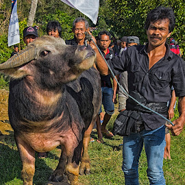the culture by Hartono Wijaya  - Animals Other ( cultural heritage, buffalo, animals, street, funeral, travel, travel photography, culture, carabaouw, street photography, animal )