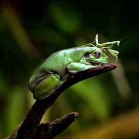 by Arief Setiawan - Animals Amphibians