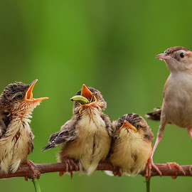 Big meal by Bernard Tjandra - Animals Birds