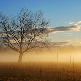 Tree at sunrise  by Todd Reynolds - Nature Up Close Trees & Bushes