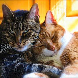 Best Buddies by Cora Westermann - Animals - Cats Portraits ( cats, animals, friends, pets )