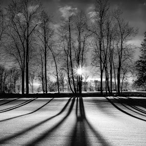 winter sunset by Marianna Armata - Landscapes Prairies, Meadows & Fields ( pwcwinter, golf course, canada, landscape, marianna armata, sun, field, sparkles, winter, shadow, sunset, snow, trees, flare, light )