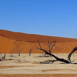 dead trees by Nico Kranenburg - Landscapes Deserts ( desert, trees, deadvlei, namibia )