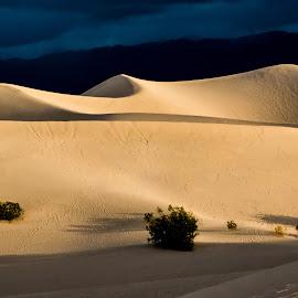 Shadows by Richard Michael Lingo - Landscapes Deserts ( death valley, desert, sand dunes, california, landscape, shadows )
