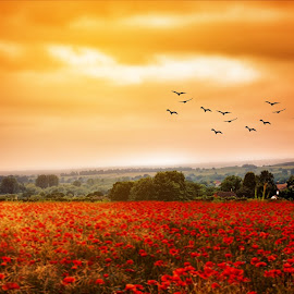Drama by Love Time - Landscapes Prairies, Meadows & Fields ( field, poppy field, nature, sunset, poppy, house, birds )