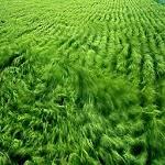 Theme - Grass Icon