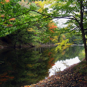Colored Trees at end of a Creek. by Jeff Dalton - Landscapes Forests ( water, lakes, pictures, lake, forest, leaves, landscape, photography, picture, nature, tree, season, seasons, fall, trees, landscapes )
