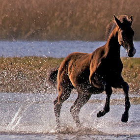 by Allan Wallberg - Animals Horses (  )